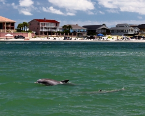 A dolphin cruises up to our boat, checking us out.