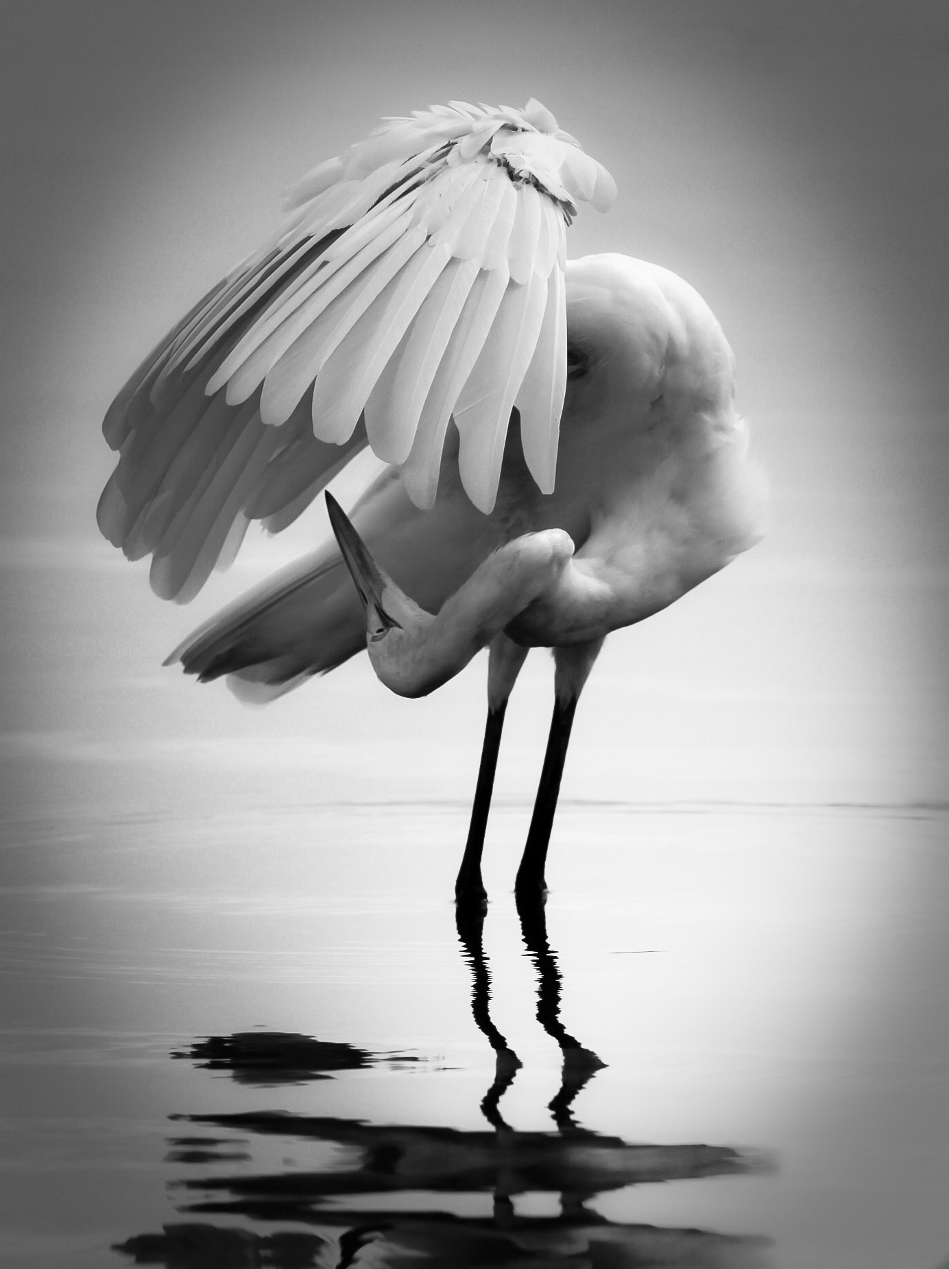 Craigoneal files wordpress com 2013 06 egret bw refinished jpg · an award winning black and white photo due colleghi