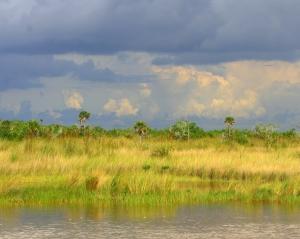 Sweeping grasslands of the Florida Everglades.