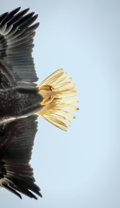 eagle 1 shorelines