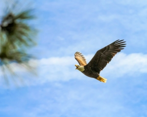 eagle 2 shorelines